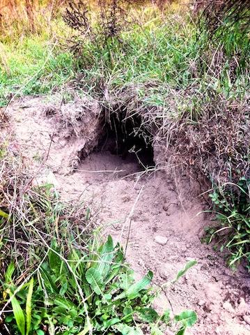 Wombat Holes