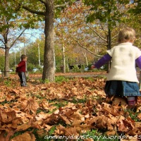 Autumn Leaves: A New Project