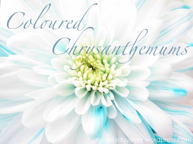 Coloured Chrysanthemums