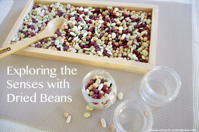 Exploring the Senses with DriedBeans