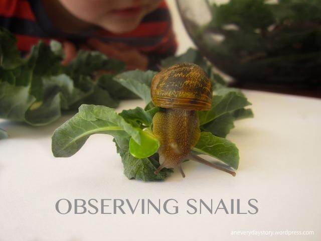 Observing Snails