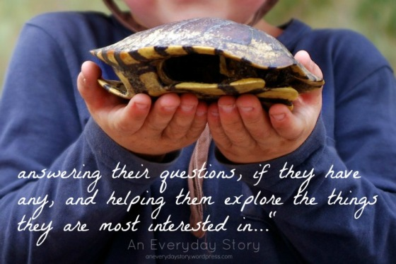 Investigating turtle shells #5 - An Everyday Story
