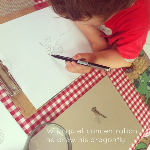 Observational art - drawing dragonflies - An Everyday Story