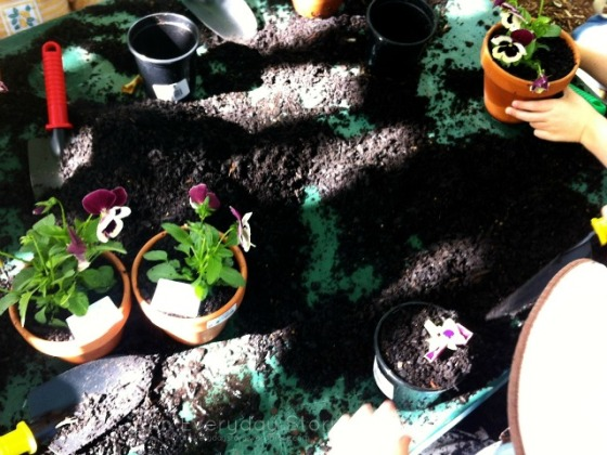 Gardening with Children - potting plants [An Everyday Story]