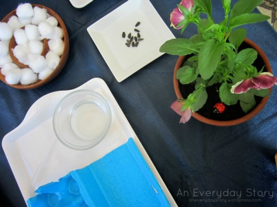 Growing Plants from Seeds - Growing Sunflowers Provocation [An Everyday Story]